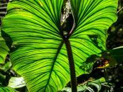 14 Vegetation, Bombuscaro, PN Podocarpus