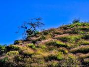 08 Sinfonie in grass on loma Nanaro