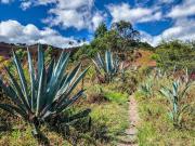 09 Cactus guards on Mollepamba loop