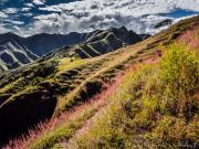 04 Flowering grass on the Lambunuma-trail