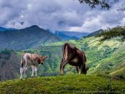 05 Encounter on the cerro Sananangui-trail