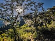 06 Bearded trees on the trail to Palto waterfall -