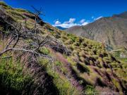08 Grass-flower carpet on the Lambunuma-trail