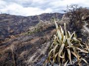 12 Buschfire on the trail above San Jose, Vilcabamba