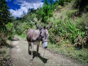 Sendero Ecologico, encounter near Barrio Tres Leguas
