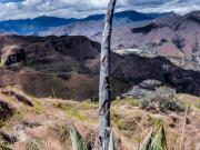 14 Fast growing cactus flower on the Tumianuma trail