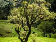 04 Sendero Ecologico, Cajanuma-Rumizhitana