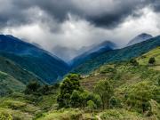 Uchima valley with Podocarpus