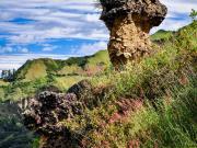 Earth mushroom in Rumi Wilco