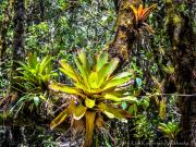 14 Bromelia on Mirador loop
