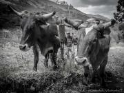 09 Sendero Ecologico, ploughing near Landangui