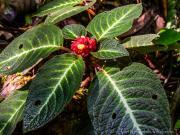 09 Vegetation, Bombuscara, PN Podocarpus