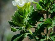06 Wayside flower, Uchima, Rio Vilcabamba
