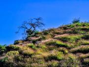 Sinfonie in grass on loma Nanaro