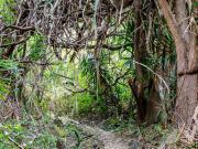 08 El Chaupi-Taxiche trail