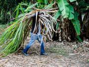 Sugarcane labourers