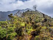 16 Rainforest in PN Podocarpus, above los Palmas reserve