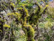 05 El Infiernillo trail, Chichilpamba valley, Masanamaca