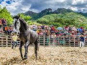 20 Rodeo Montubio
