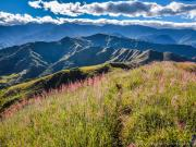 03 Flowering grass on the Lambunuma-trail