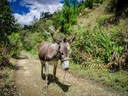 13 Sendero Ecologico, encounter near Barrio Tres Leguas