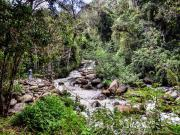 Jungle in the valley of rio Yambala