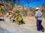 07 Donkey-transport at Gararango