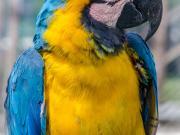 03 Parrot, Vilcabamba zoo