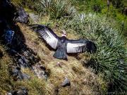Condor, Baños zoo