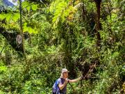 13 Fern-trees on the los Palmas trail of PN Podocarpus