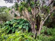 09 Vegetation on the Masanamaca trail