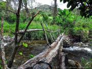 Log-bridge crossing rio Uchima near San Pedro de Vilcabmba