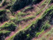 06 Sinfonie in grass on loma Nanaro