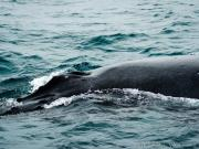 Whale watching trip, Puerto Lopez