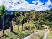 Trail on the Mollepamba loop