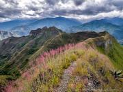 11 Flowering grass on the Mandango-ridge trail