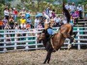 22 Rodeo Montubio