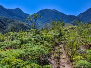 11 Trail leading to the refugio las Palmas