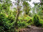 05 Sendero Ecologico, Rumizhitana - Landangui