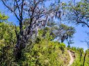 06 Bearded tree with Bromelias on the waterfall Palto-trail